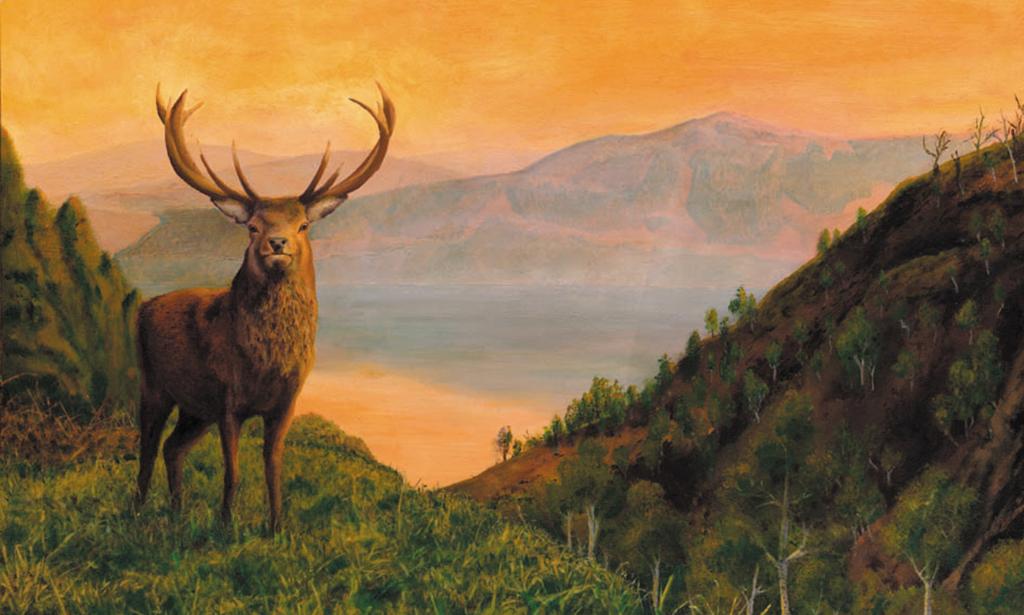 Highlander Wanderer