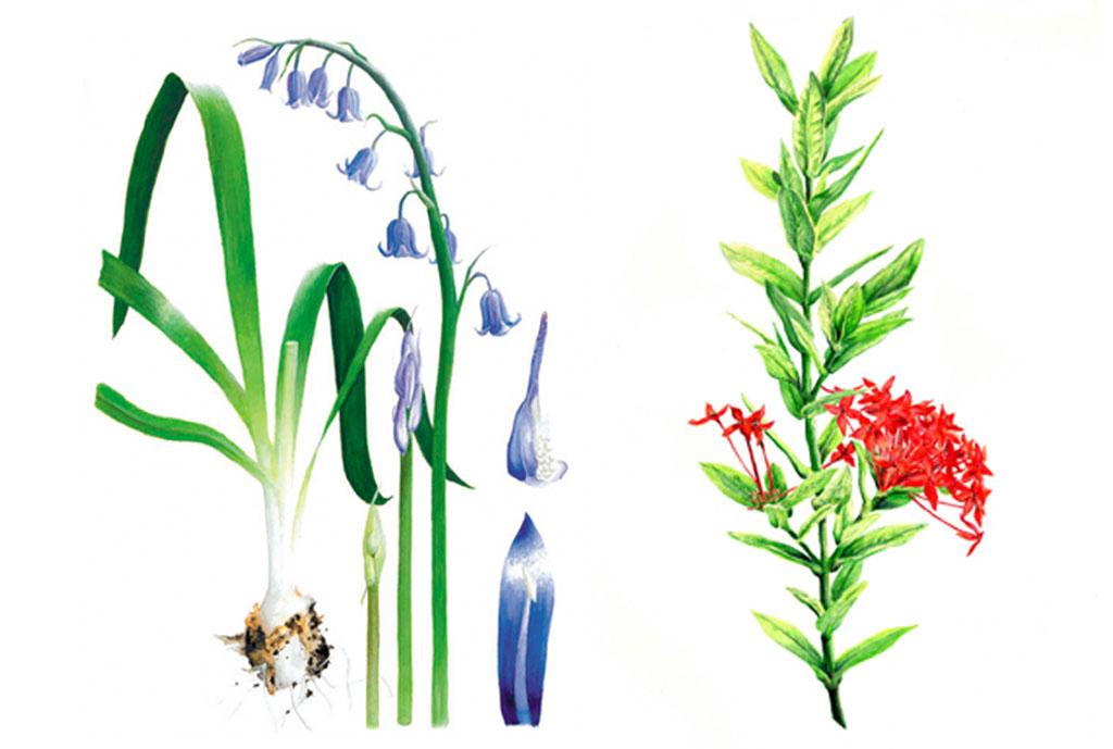 Plant-study